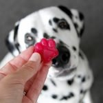 Naturally hot pink gelatin gummy dog treat recipe