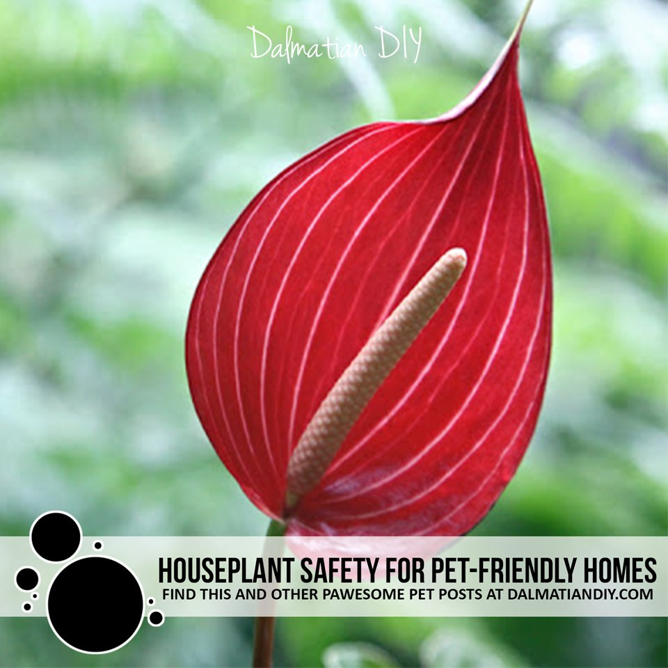 Houseplant safety for pet-friendly homes