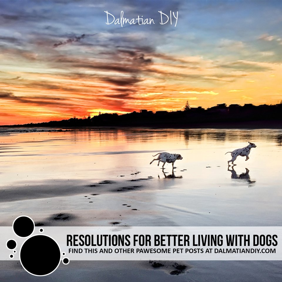 New Year's resolutions for better living with happier healthier dogs