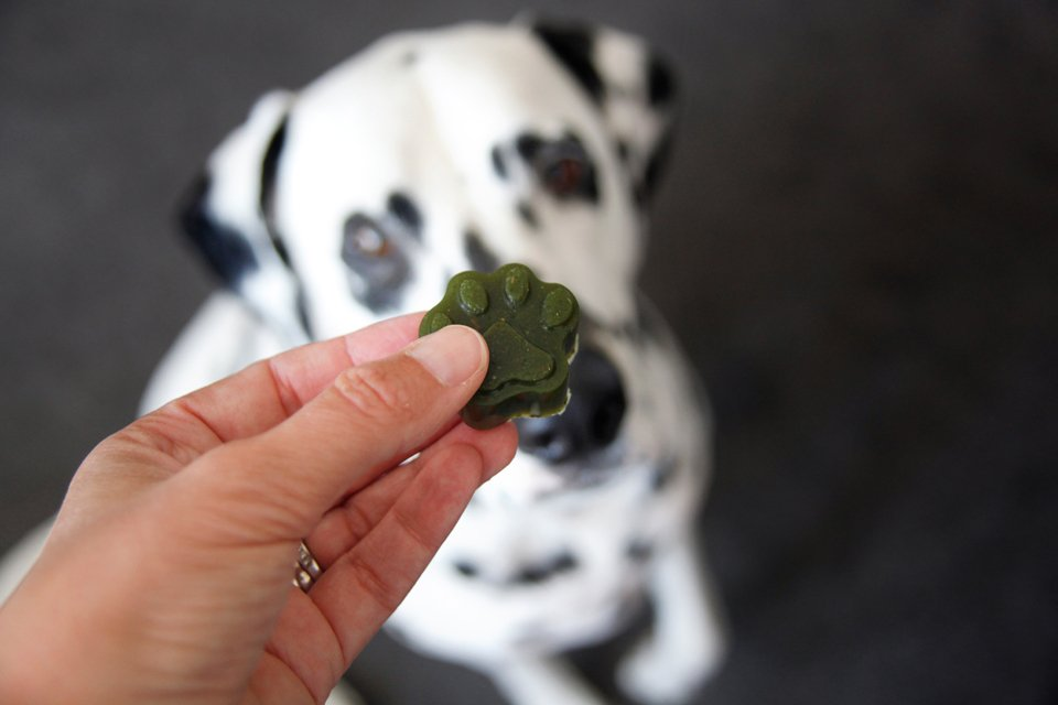 Homemade chicken and kale gelatin gummy dog treats