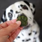 Naturally green kale and herb chicken gelatin gummy dog treats for St. Patrick's Day