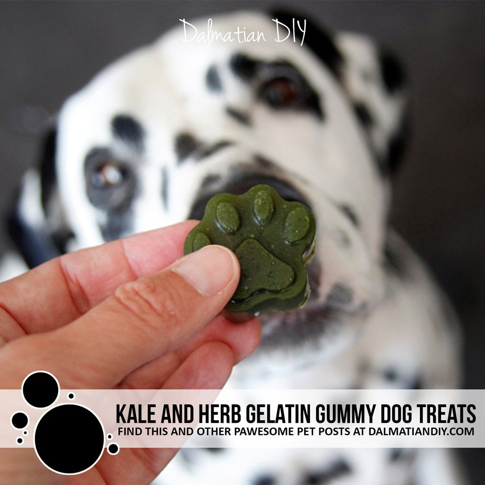 Naturally green kale and herb chicken gelatin gummy dog treats.