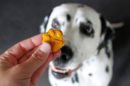 Golden turmeric and coconut milk gelatin gummy dog treat