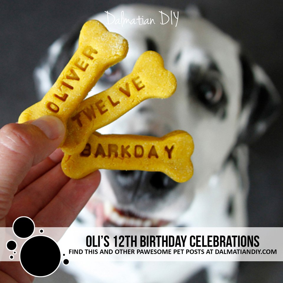 Oli the Dalmatian dog's 12 birthday party celebration