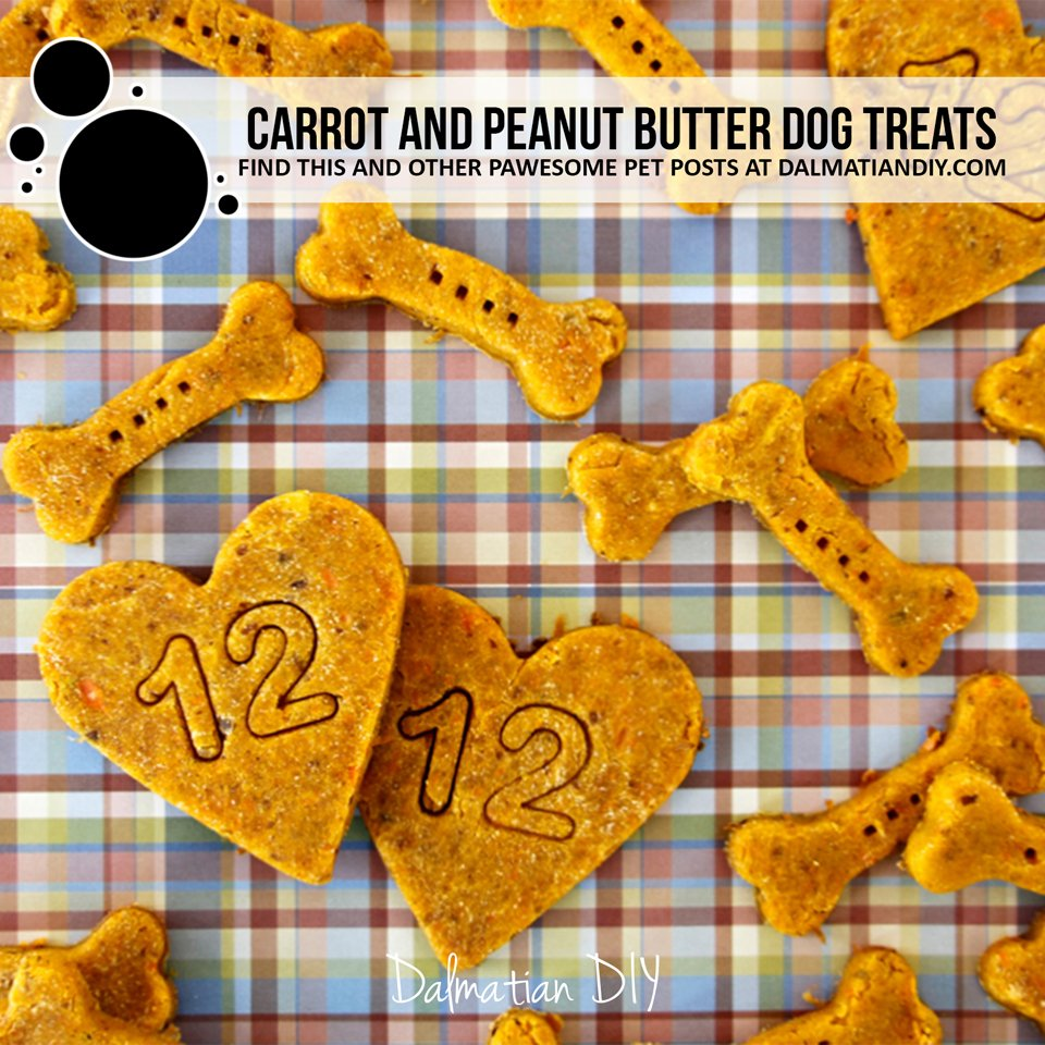 Homemade carrot and peanut butter dog treat recipe