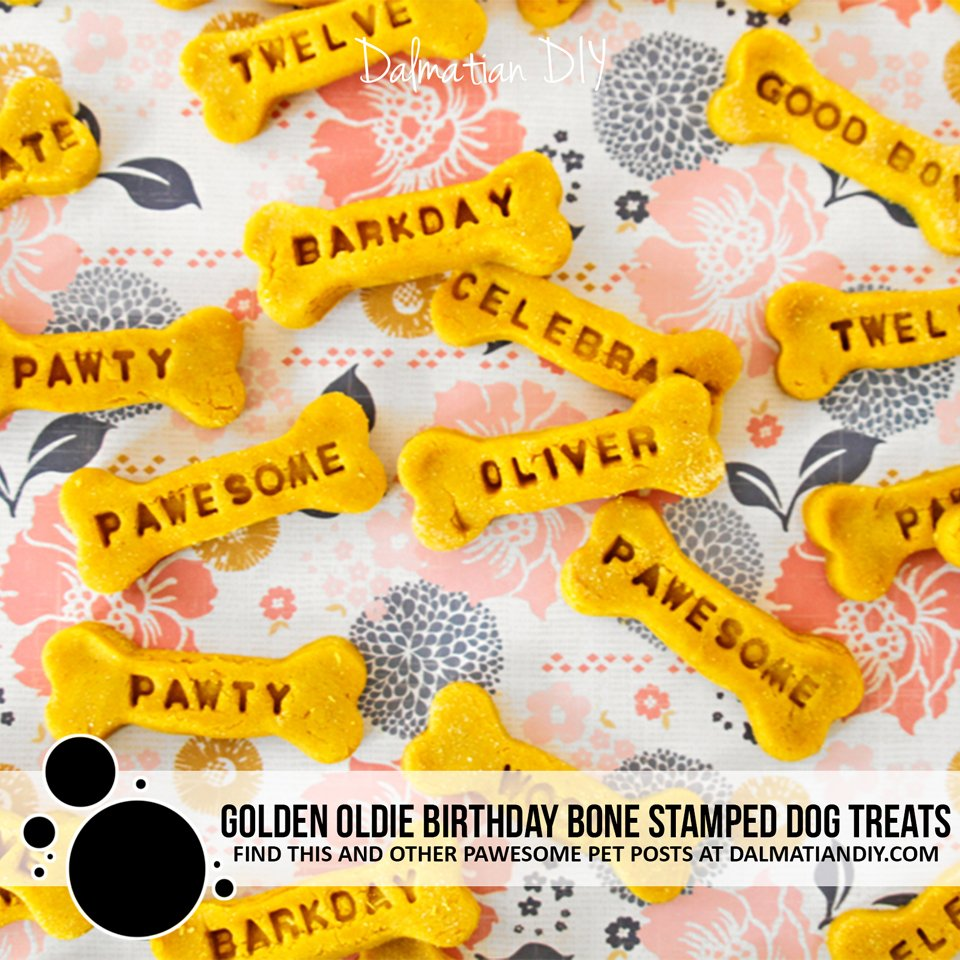 Homemade peanut butter turmeric stamped golden oldie dog birthday treats