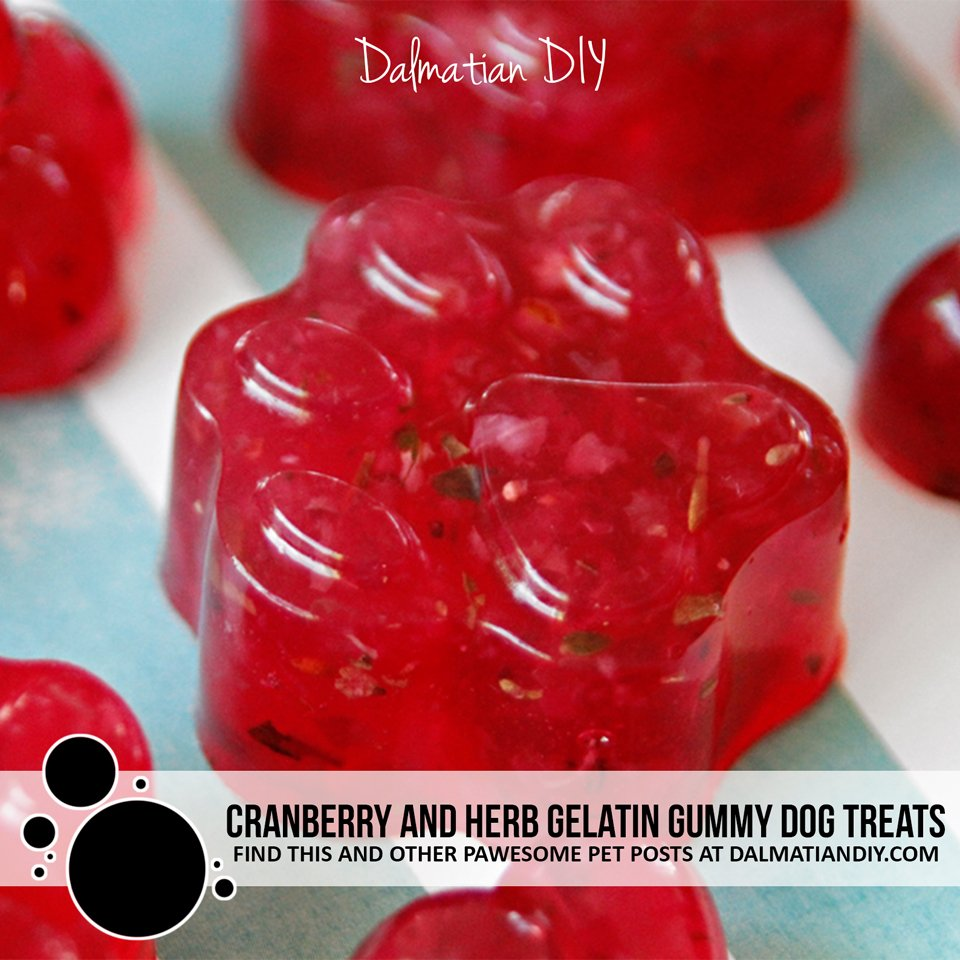 Cranberry herb gelatin gummy dog treat recipe
