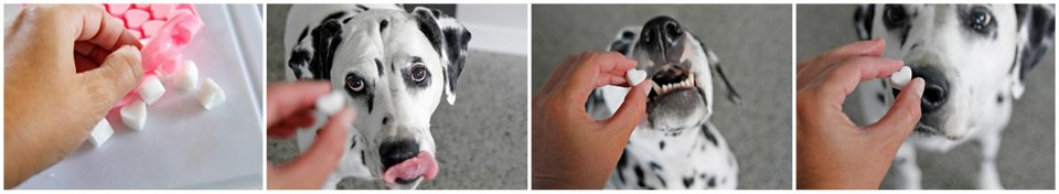 Super Simple DIY Dog Treats Using Coconut Oil