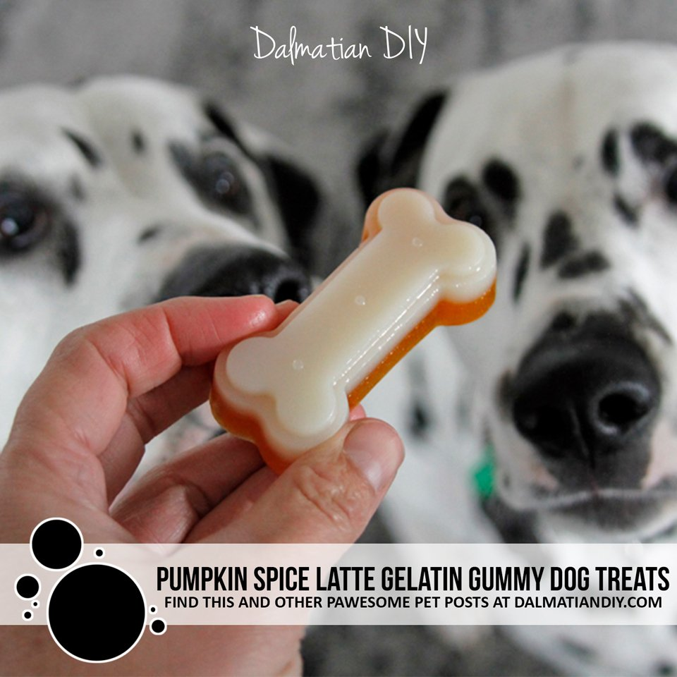 Pumpkin spice latte gelatin gummy dog treat recipe