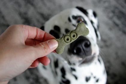 Easy homemade Halloween frankenbone and monster dog treats