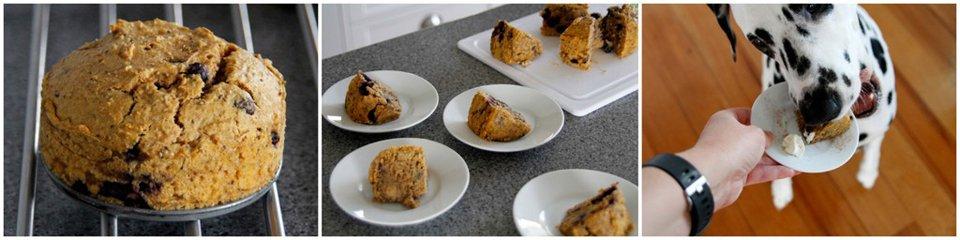 Homemade peanut butter pumpkin blueberry cake recipe for dogs