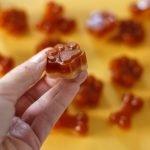 Pumpkin pie gelatin gummy dog treat recipe