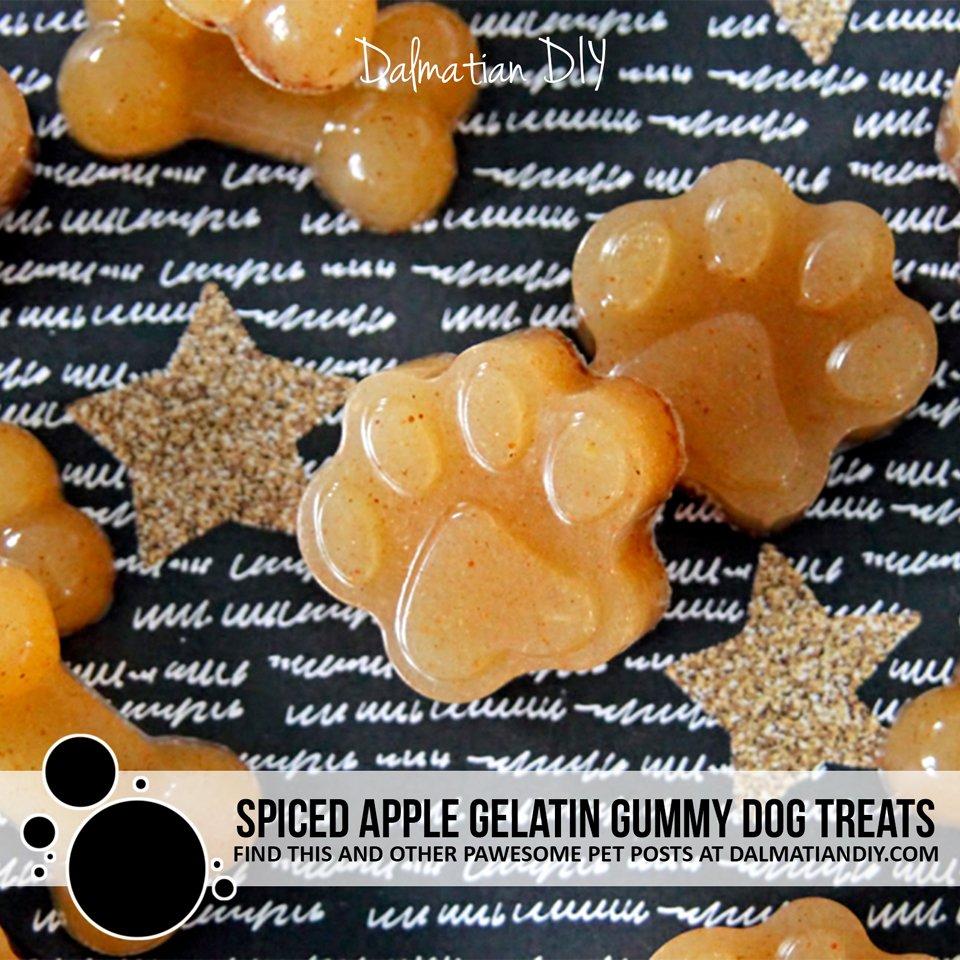 Spiced apple gelatin gummy dog treat recipe