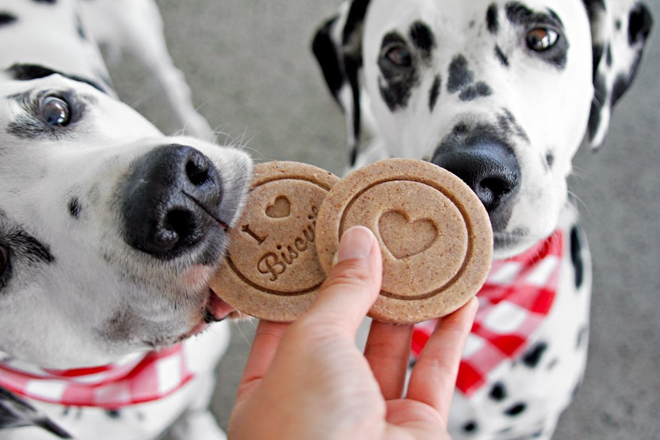DIY ideas for making special homemade Valentine's Day dog treats