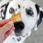 Dalmatian dog looking at homemade dehydrated fish jerky dog treat