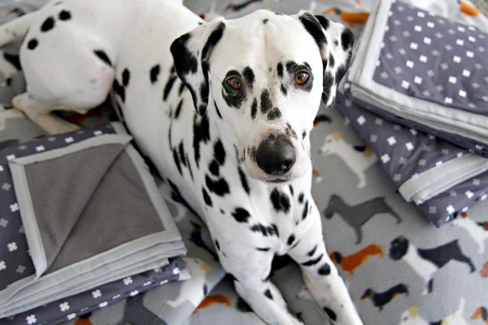 DIY dog blankets