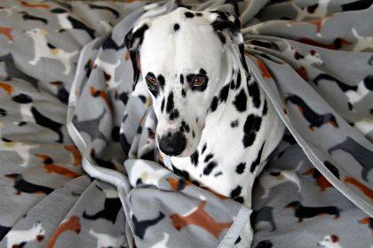 DIY fleece dog blankets with bound edges