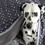 DIY quick dry layered dog blanket with bound edges