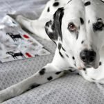 DIY reversible cotton flannelette dog blankets