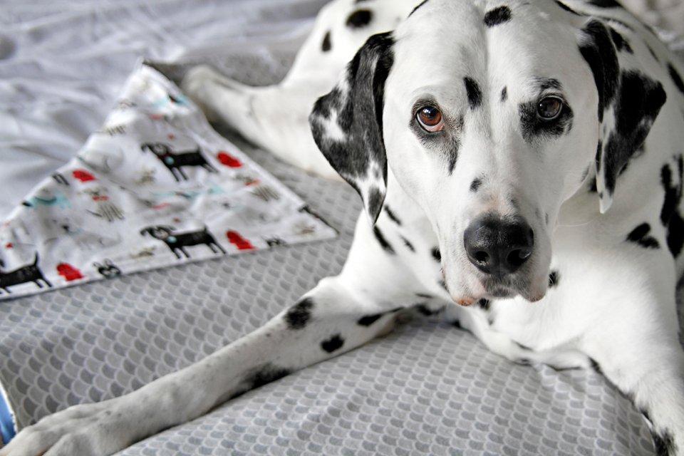 DIY reversible cotton flannelette dog blankets