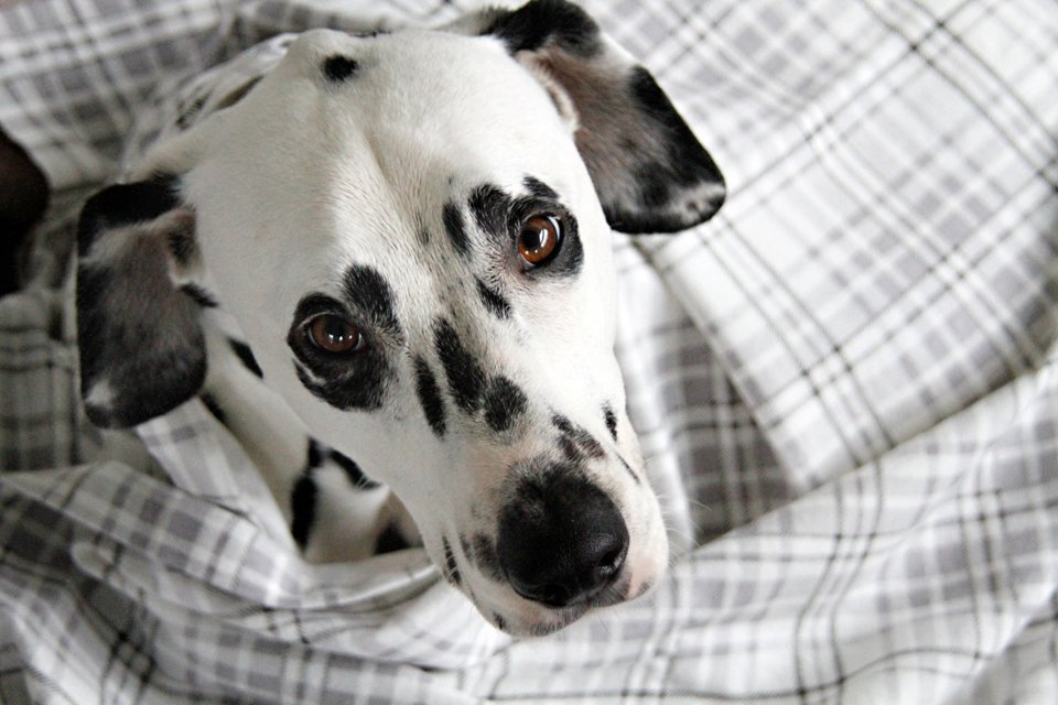 DIY simple cotton flannelette dog blankets and dry cloths