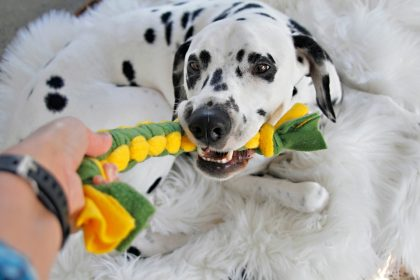 DIY cobra knot woven fleece dog tug toy
