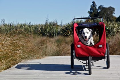 Choosing and using a dog stroller for senior dog quality of life