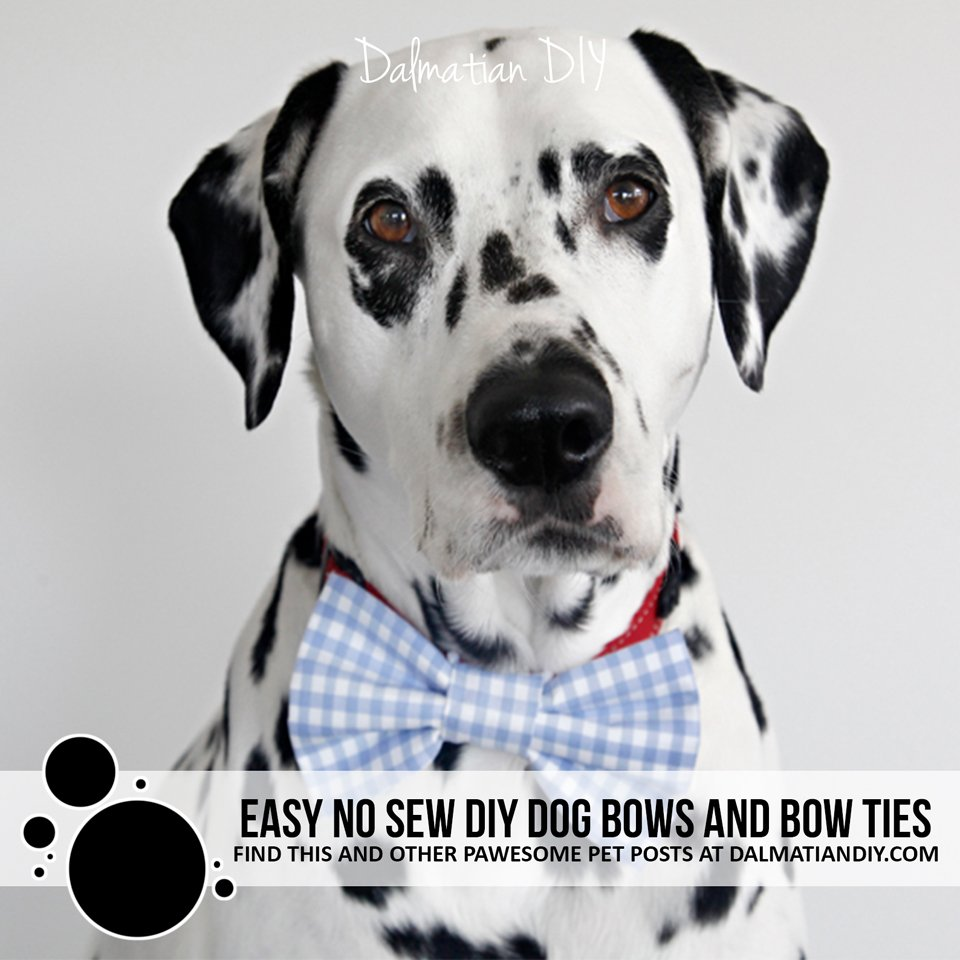 DIY easy no sew dog collar bows and bow ties