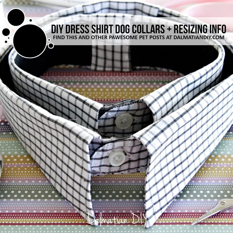 DIY recycled dress shirt dog collars including resizing larger or smaller
