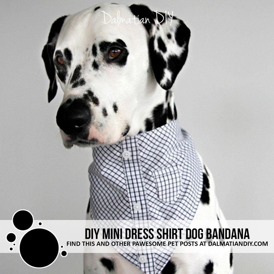 DIY mini dress shirt dog bandana