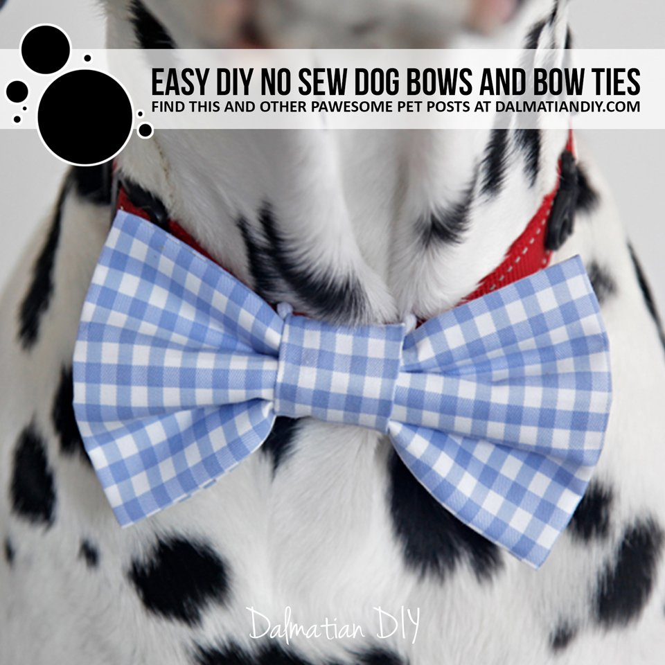 DIY no sew dog collar bow tie and sleeve