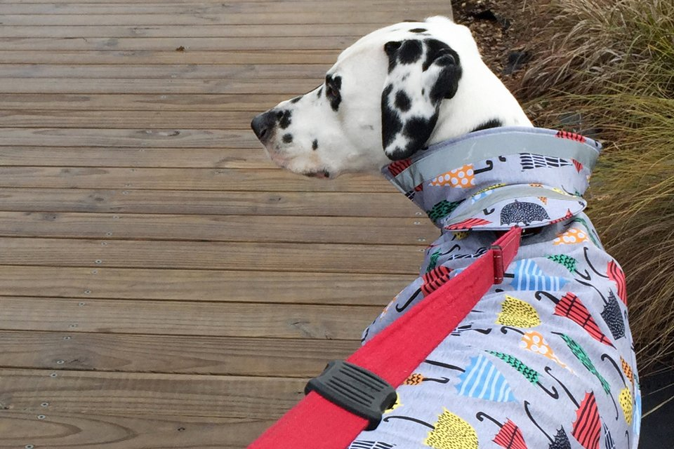 DIY dog raincoat with popped collar and shielded leash opening