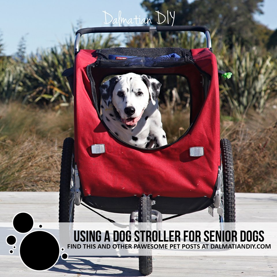 Choosing and using a stroller for senior dogs