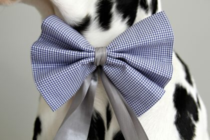 DIY no-sew special occasion dog bows and bow ties