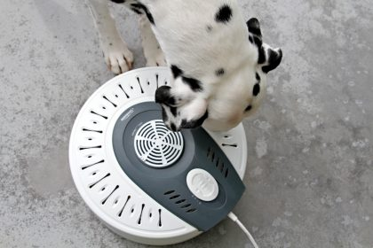 Homemade dehydrated dog treats