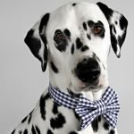 DIY recycled French cuff dog bow ties and button placket collar bands