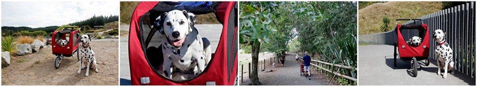 Choosing and Using a Senior Dog Stroller