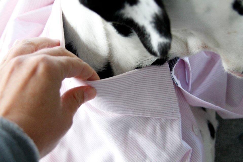 DIY Dress Shirt Dog Collars (and How to Adjust Collar Size)