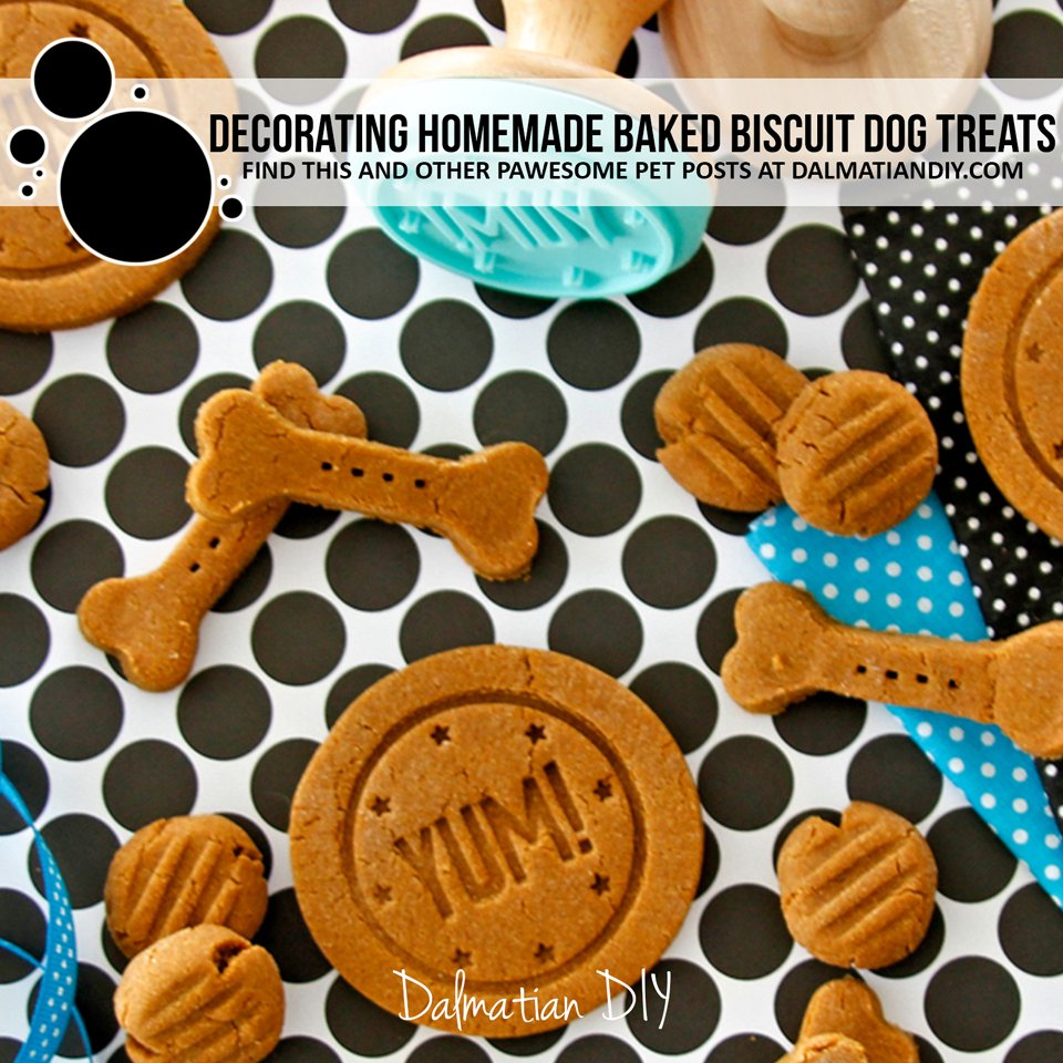Decorating homemade baked biscuit and cookie dog treats