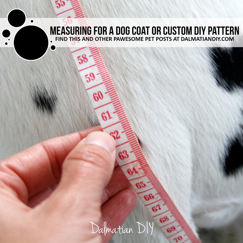How to measure a dogy for a coat or DIY coat pattern