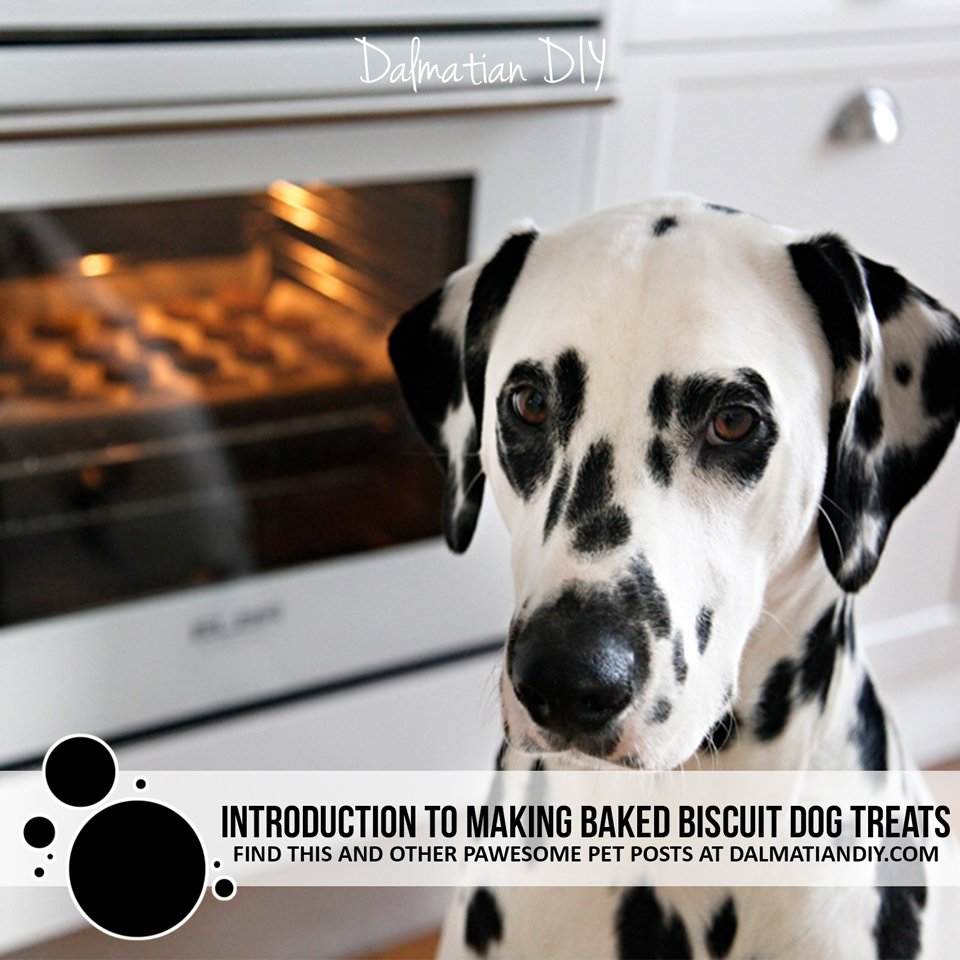 Introduction to making homemade baked biscuit (cookie) dog treats