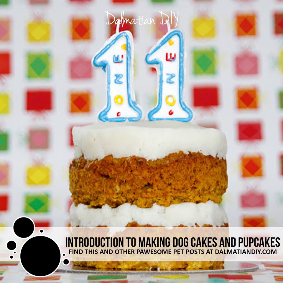Homemade birthday cakes for dogs
