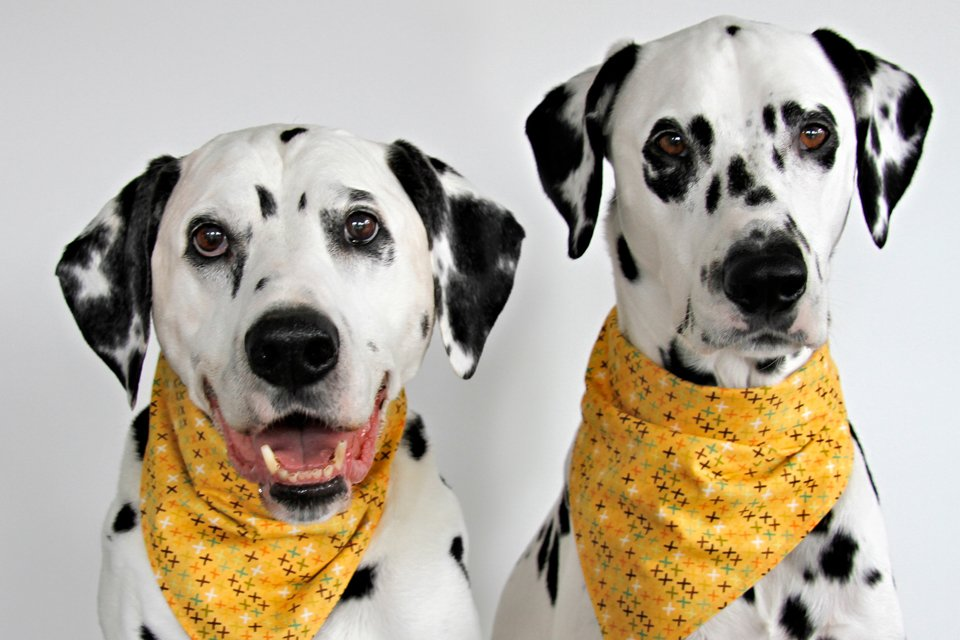 Styling and design options to give DIY dog bandanas more options for versatile wear