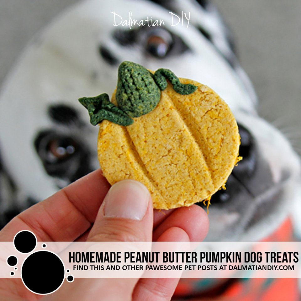 Homemade pumpkin shaped peanut butter and pumpkin dog treats