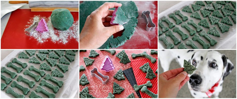 Making naturally green Christmas tree dog treats with spirulina powder
