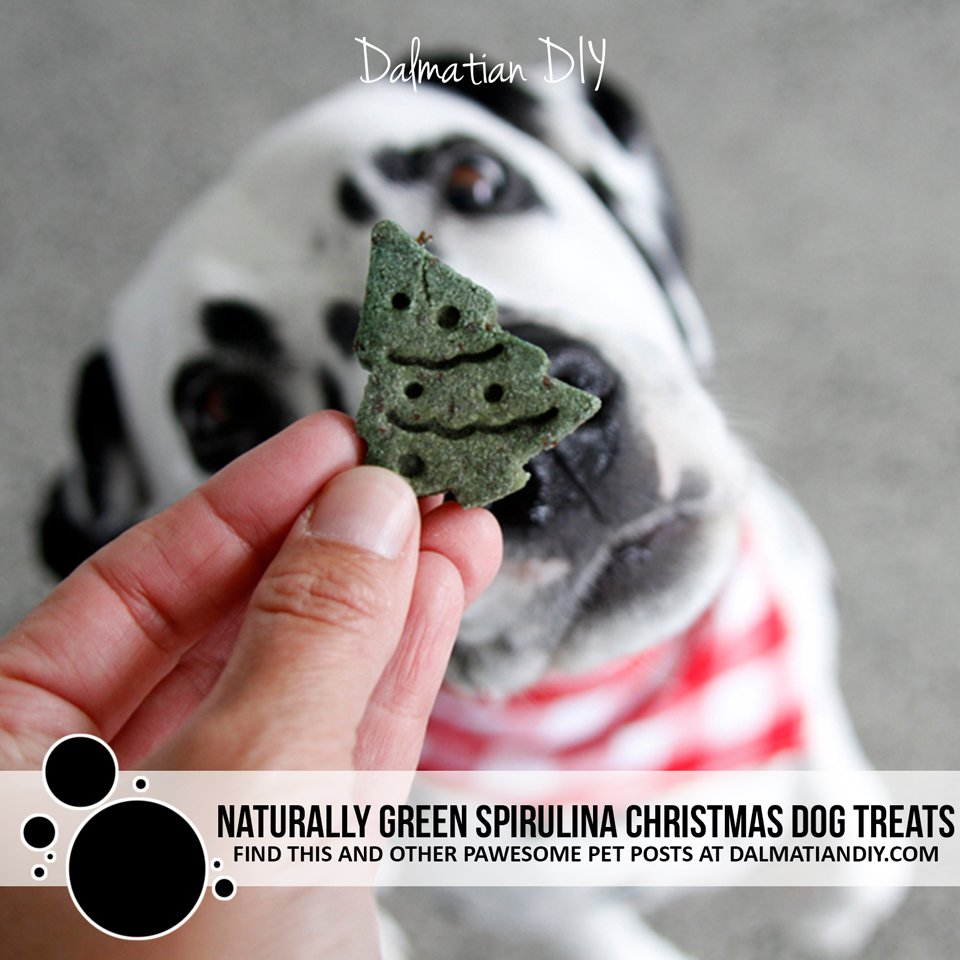 Naturally green spirulina Christmas dog treat recipe