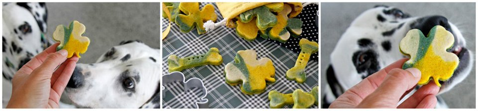 Dalmatian dogs with homemade St. Patrick's Day dog treats