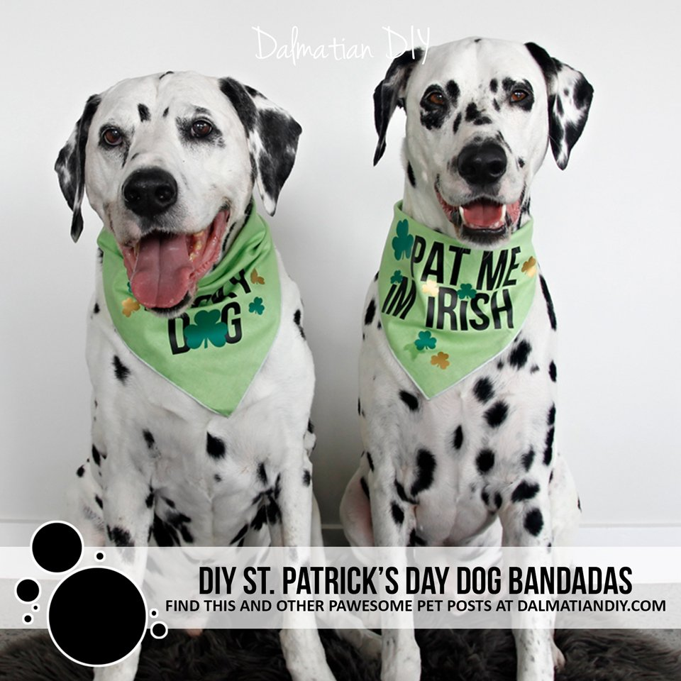DIY St. Patrick's Day dog bandanas with Cricut heat transfer iron-ons