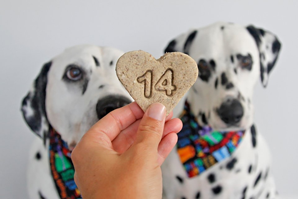 Dalmatian dogs with stamped homemade 14th birthday dog treats
