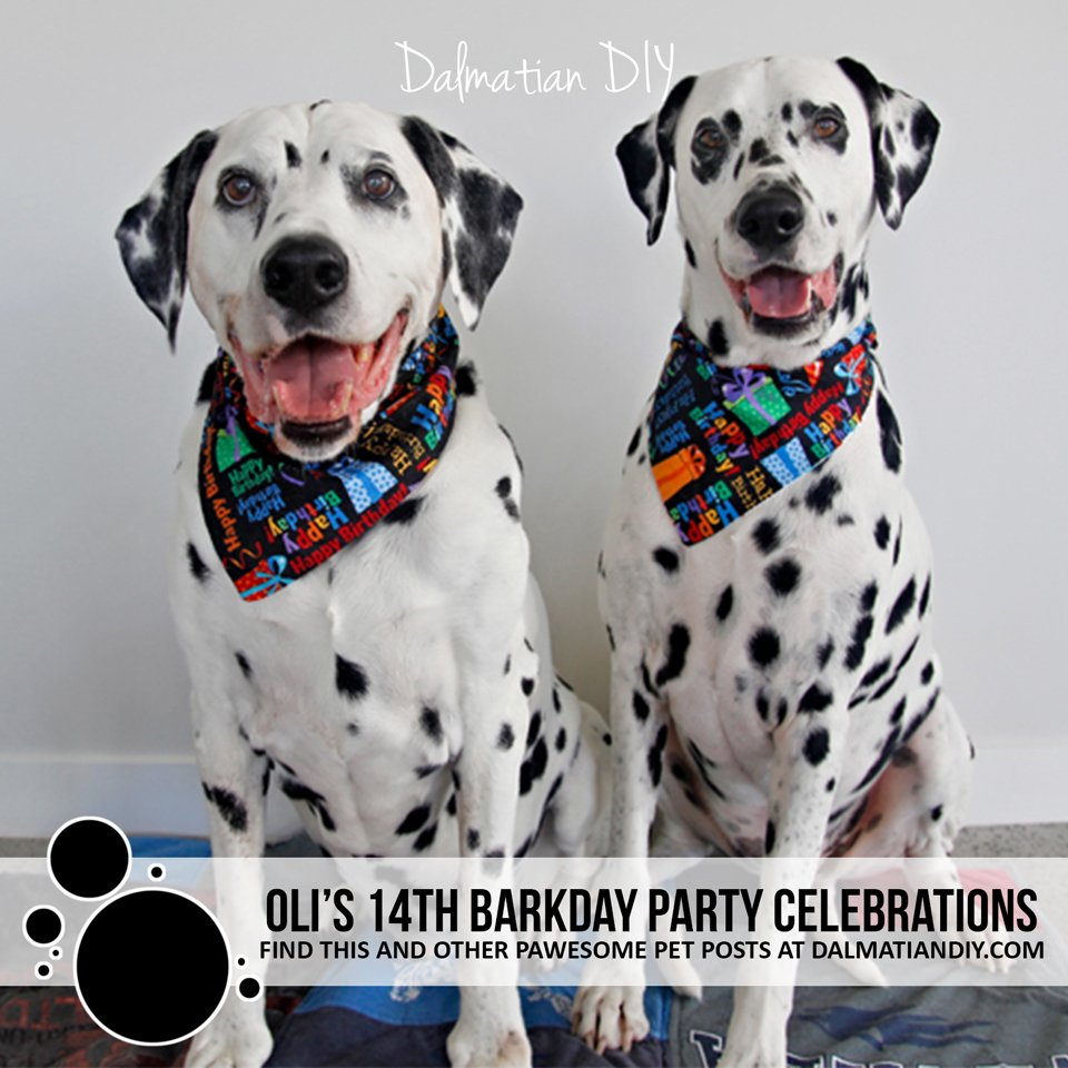 Oli's 14th dog birthday (barkday) party celebrations